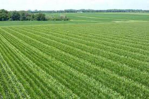 واگذاری تنها 2 درصد از اراضی کرمانشاه به کشاورزان غیربومی