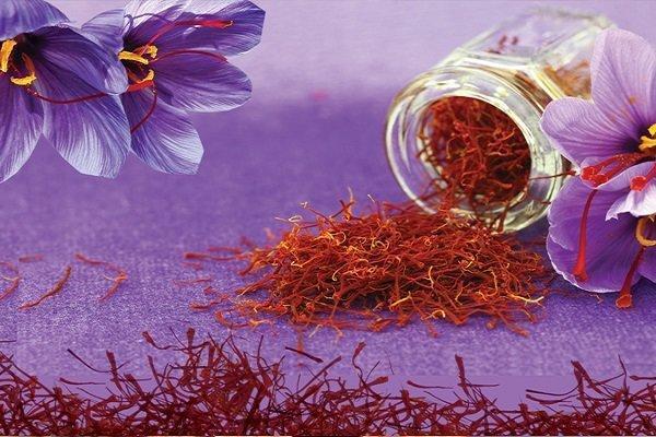 خرید روزانه 20 تن گل زعفران در خراسان رضوی