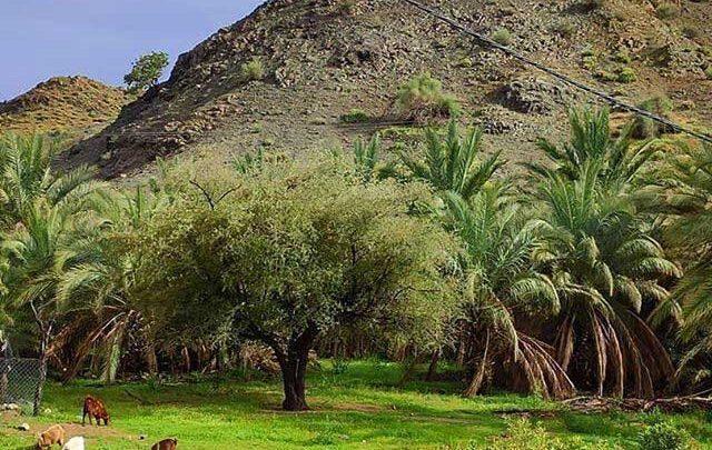روستای کوهشاه ریگان نگینی در دل کویر